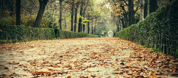 Retreat Path Leaves
